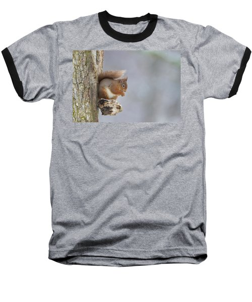 Red Squirrel On Tree Fungus Baseball T-Shirt