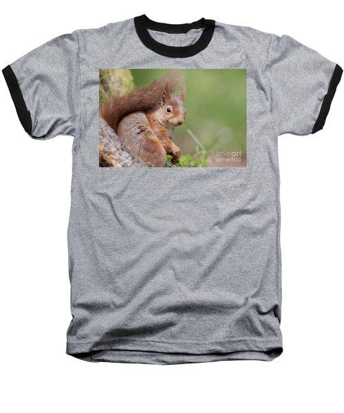 Red Squirrel - Scottish Highlands  #17 Baseball T-Shirt