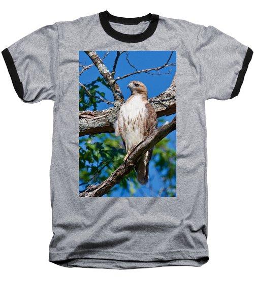 Red-tail Hawk 6813 Baseball T-Shirt