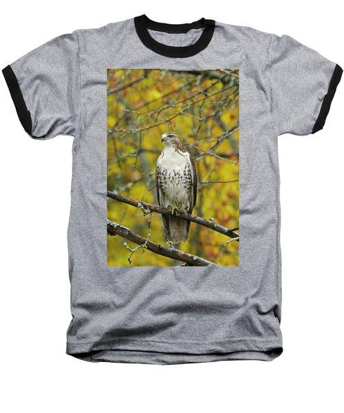 Red Tail Hawk 9888 Baseball T-Shirt by Michael Peychich