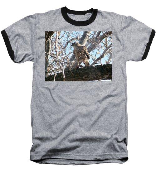Red Tail Hawk Baseball T-Shirt