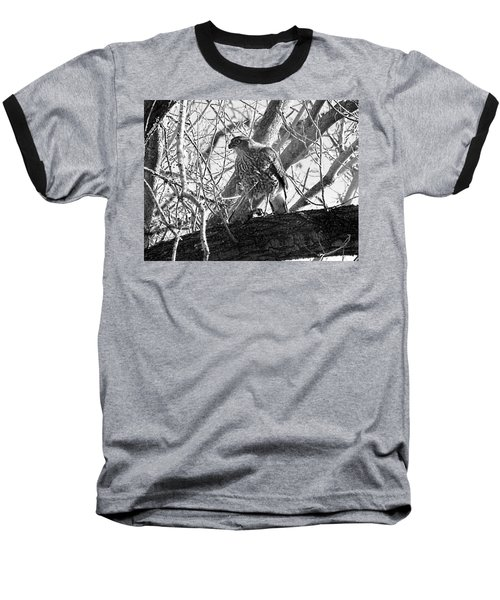 Red Tail Hawk In Black And White Baseball T-Shirt