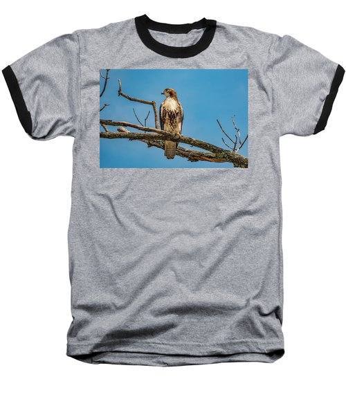Red Tail Hawk Perched Baseball T-Shirt