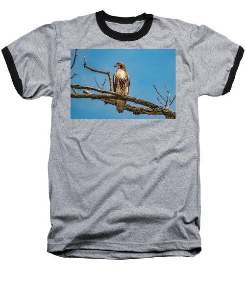 Red Tail Hawk Perched Baseball T-Shirt