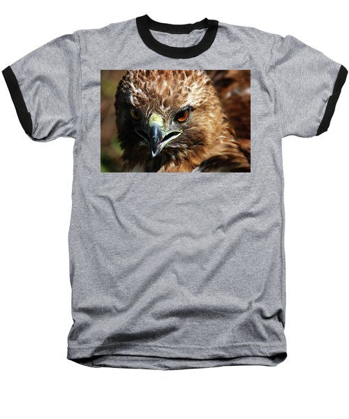 Baseball T-Shirt featuring the photograph Red-tail Hawk Portrait by Anthony Jones