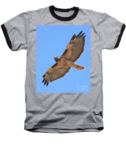 Red Tailed Hawk In Flight Baseball T-Shirt