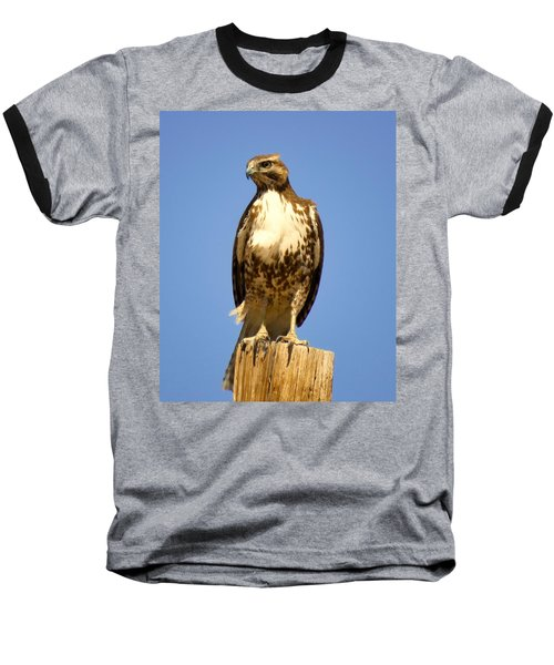Red-tailed Hawk On Post Baseball T-Shirt