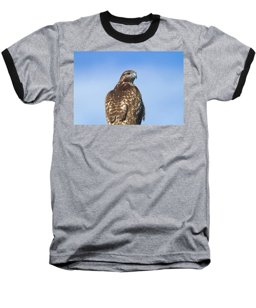Red-tailed Hawk Perched Looking Back Over Shoulder Baseball T-Shirt