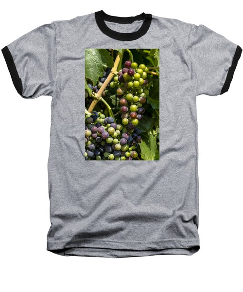 Red Wine Grape Colors In The Sun Baseball T-Shirt