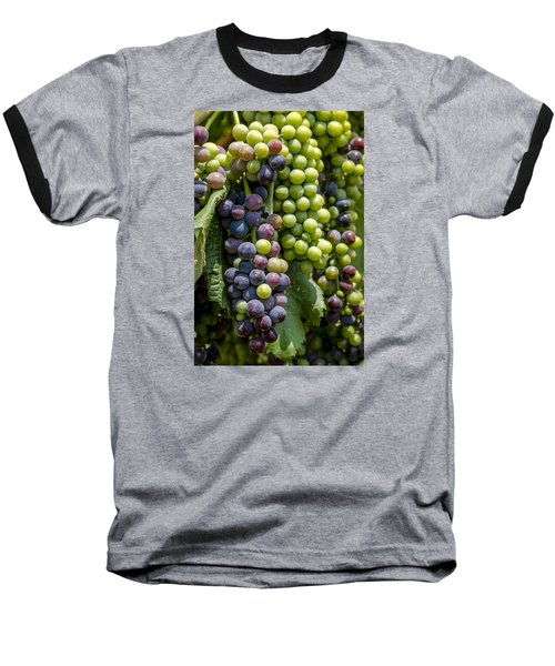 Red Wine Grapes In The Vineyard Baseball T-Shirt