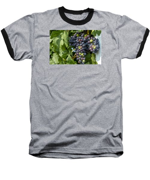 Red Wine Grapes On The Vine Baseball T-Shirt by Teri Virbickis