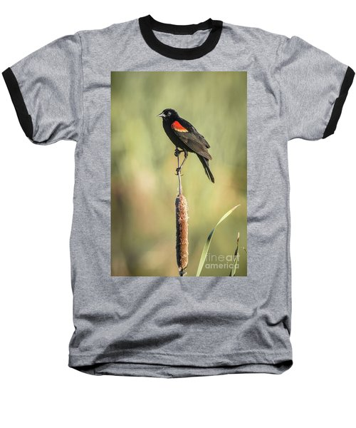 Red-wing On Cattail Baseball T-Shirt by Robert Frederick