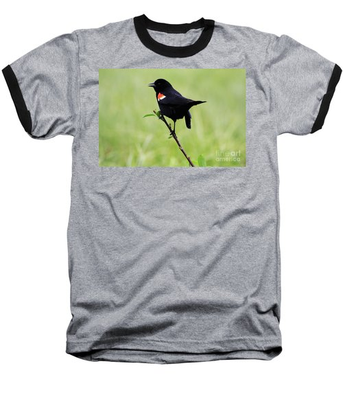 Red Winged Blackbird Baseball T-Shirt by Alyce Taylor