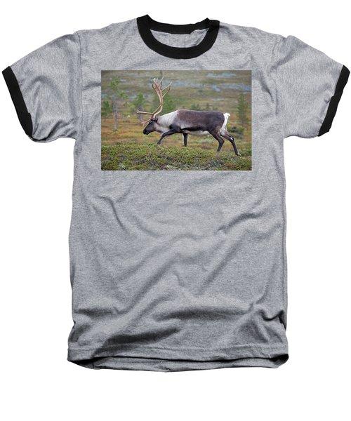 Reindeer Baseball T-Shirt by Aivar Mikko