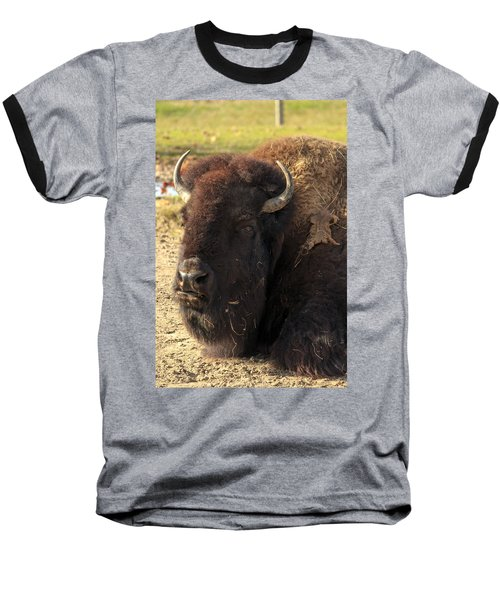 Resting Buffalo Baseball T-Shirt