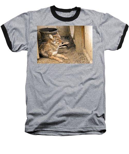 Resting Coyote Baseball T-Shirt