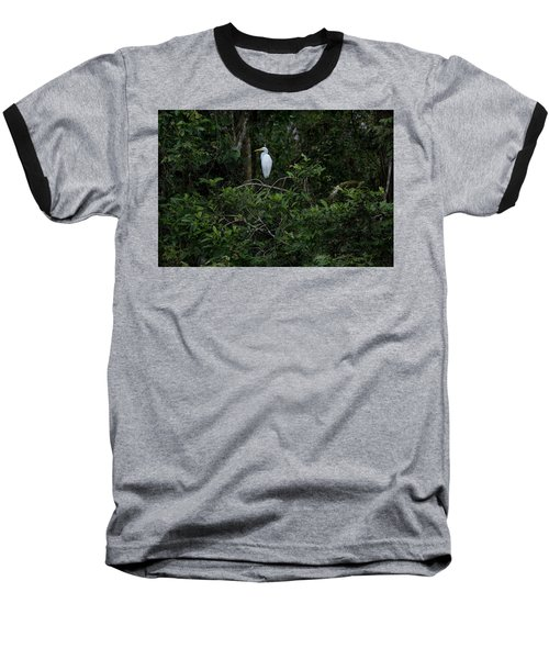 Resting Egret Baseball T-Shirt by James David Phenicie