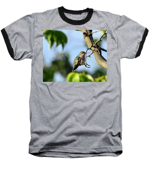 Resting Hummingbird Baseball T-Shirt by Kathy Eickenberg