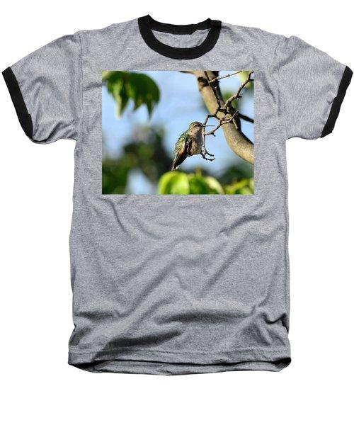 Resting Hummingbird Baseball T-Shirt