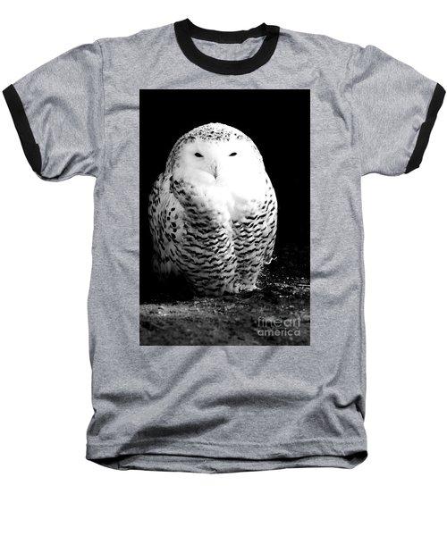 Resting Snowy Owl Baseball T-Shirt by Darcy Michaelchuk