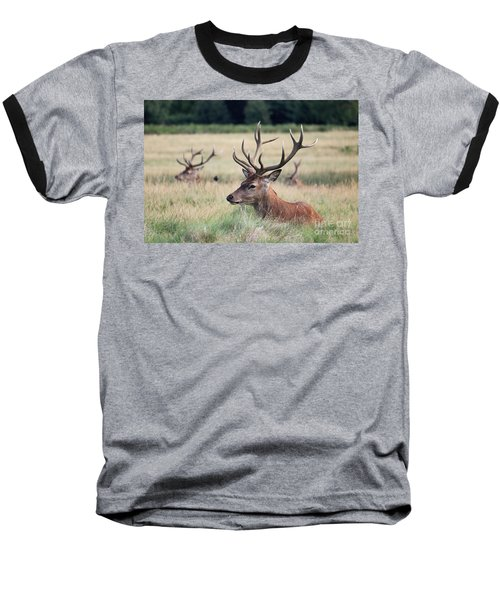 Richmond Park Stags Baseball T-Shirt
