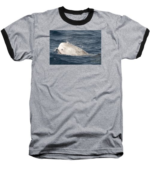 Risso Dolphin Baseball T-Shirt by Loriannah Hespe