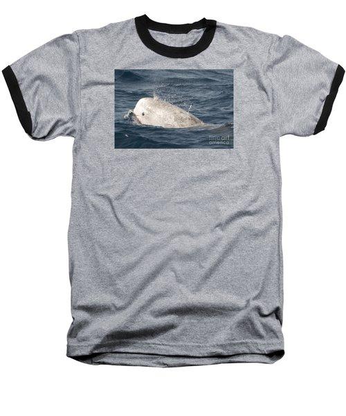 Risso Dolphin Baseball T-Shirt