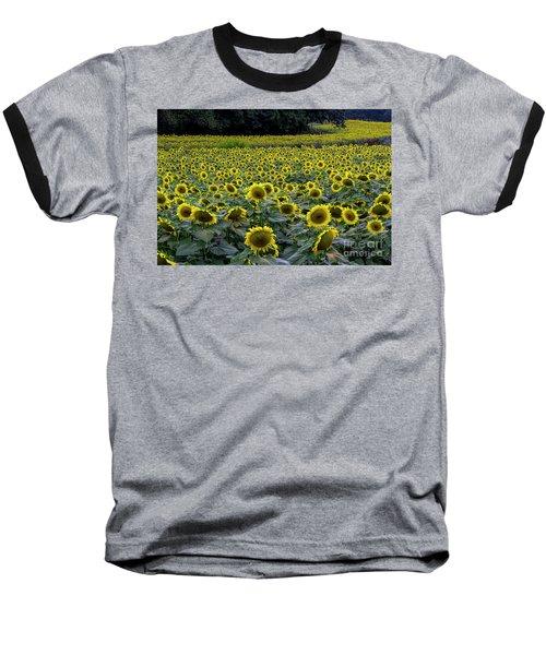 River Of Sunflowers Baseball T-Shirt by Barbara Bowen