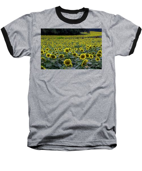 River Of Sunflowers Baseball T-Shirt