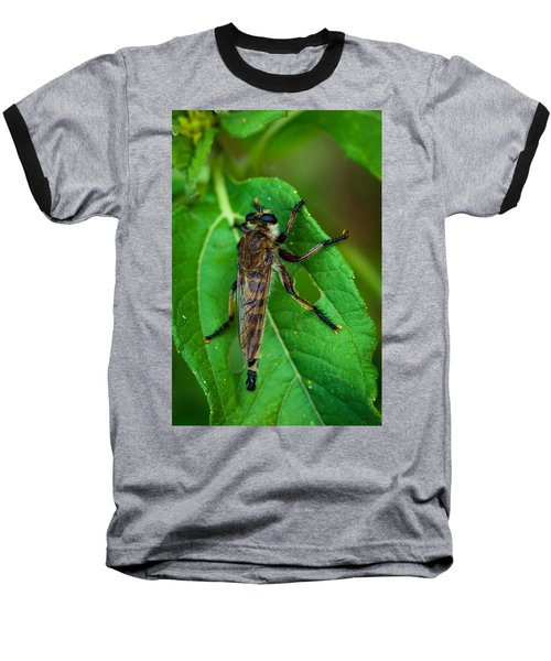 Robber Fly 1 Baseball T-Shirt