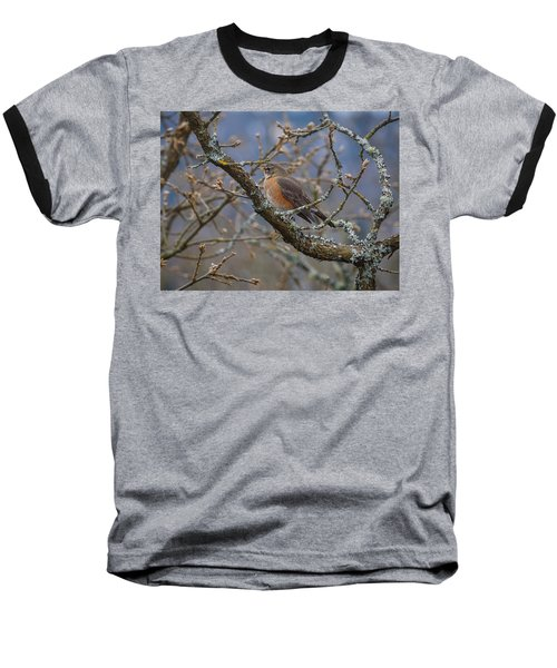 Robin In A Tree Baseball T-Shirt by Keith Boone