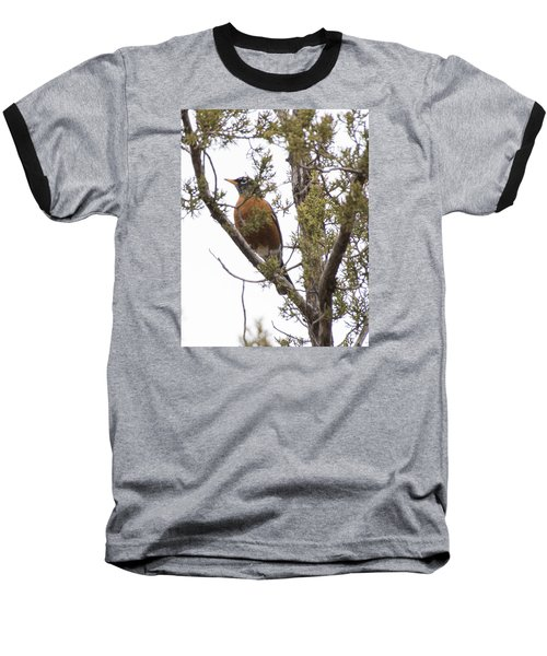 Baseball T-Shirt featuring the photograph Robin On The Lookout by Laura Pratt