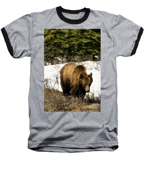 Rockies Grizzly Baseball T-Shirt