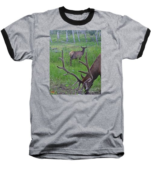 Rocky Mountain Bull Elk And Cow Baseball T-Shirt