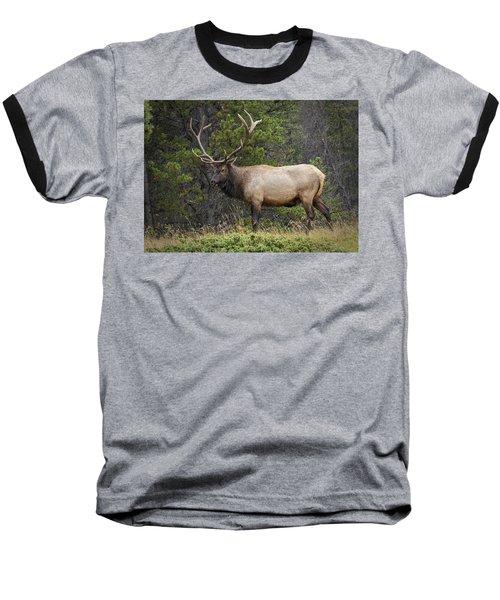 Rocky Mountain National Park Bull Elk Baseball T-Shirt