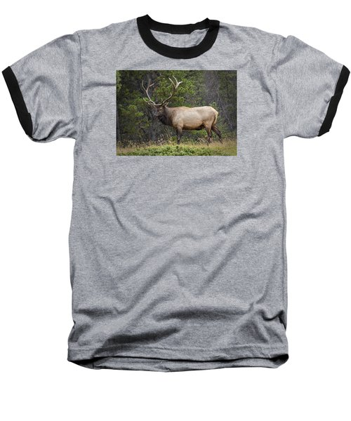 Rocky Mountain National Park Bull Elk Baseball T-Shirt