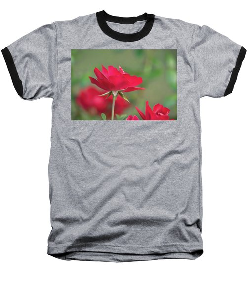 Rose 4 Baseball T-Shirt