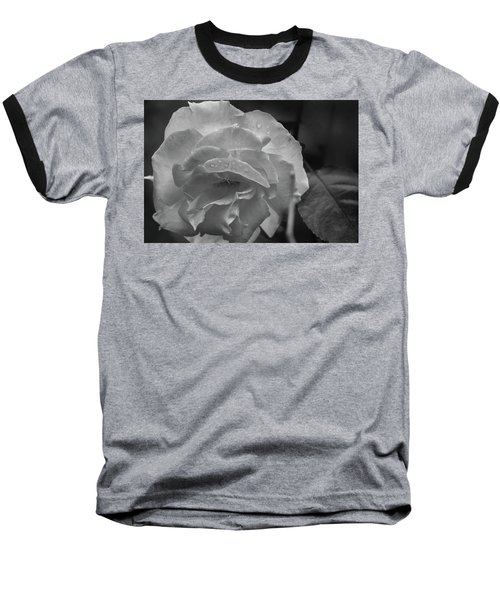Rose In Black And White Baseball T-Shirt by Kelly Hazel