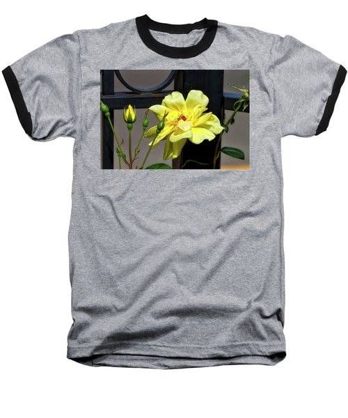 Rose On Wrought Iron Baseball T-Shirt