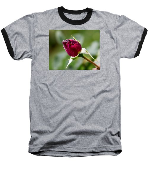 Rosebud Baseball T-Shirt by Cathy Donohoue