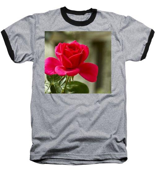 Red Rose Wall Art Print Baseball T-Shirt by Carol F Austin
