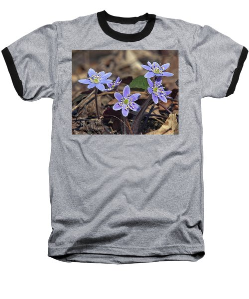 Round-lobed Hepatica Dspf116 Baseball T-Shirt by Gerry Gantt