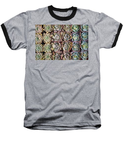 Rows Of Succulents  Baseball T-Shirt by Catherine Lau