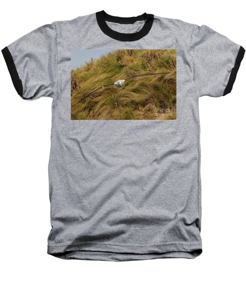 Royal Albatross 2 Baseball T-Shirt by Werner Padarin