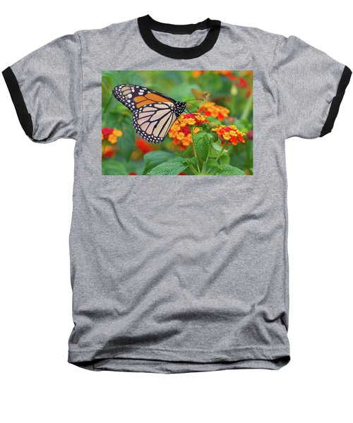 Royal Butterfly Baseball T-Shirt by Shelley Neff