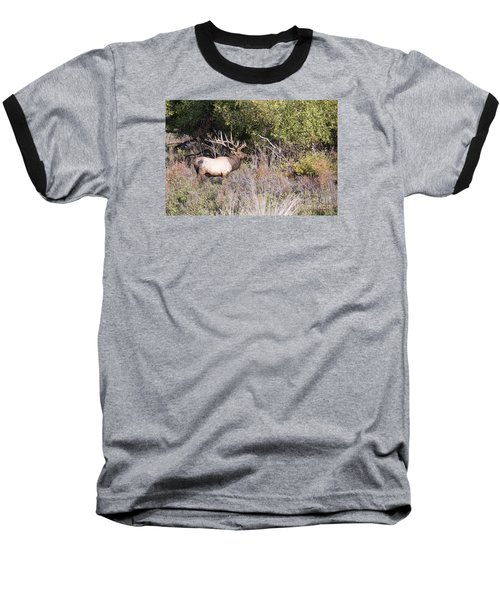Royal Baseball T-Shirt