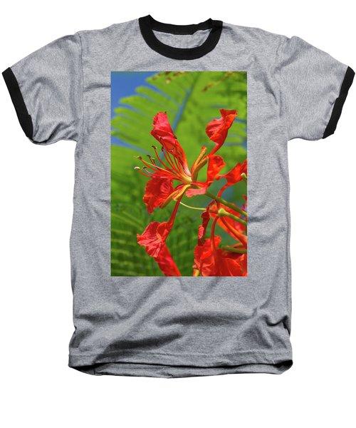 Royal Poinciana Flower Baseball T-Shirt