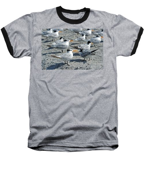 Royal Terns Baseball T-Shirt by Paul Mashburn