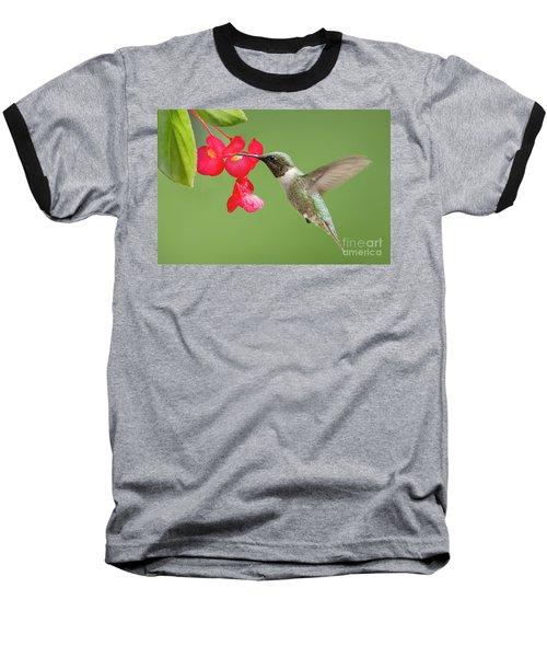 Ruby Throated Hummingbird Feeding On Begonia Baseball T-Shirt