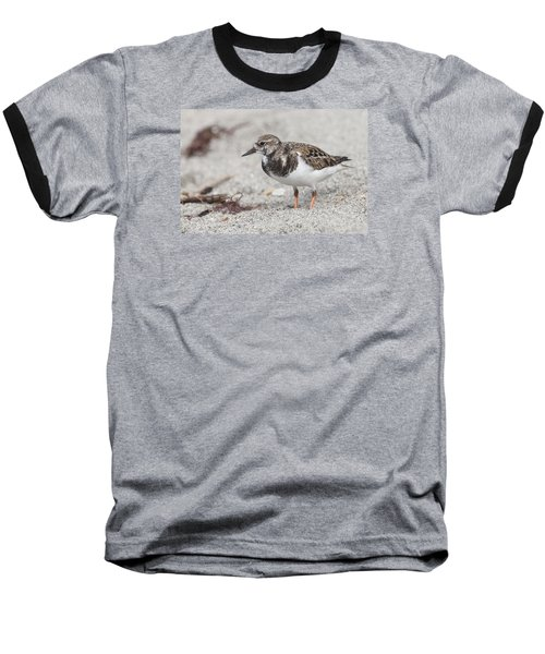Ruddy Turnstone On The Beach Baseball T-Shirt